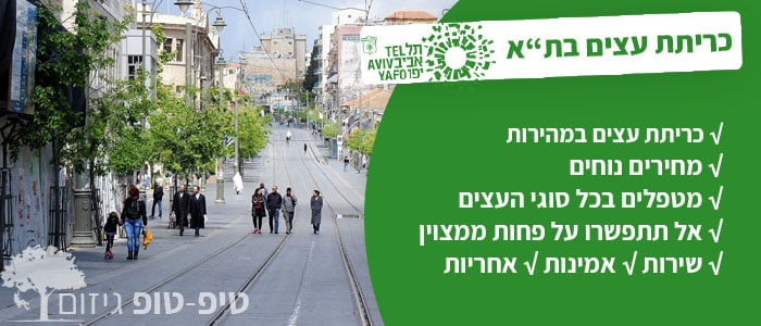 כריתת עצים בתל אביב