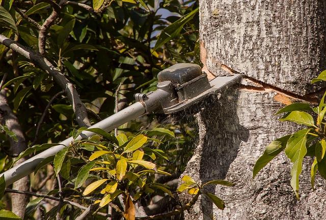 עץ בזמן גיזום ברמת השרון