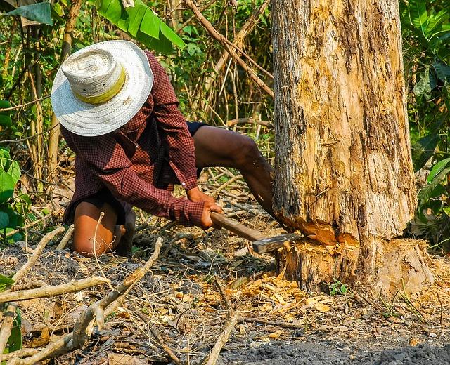 בזמן כריתת עץ בגינה