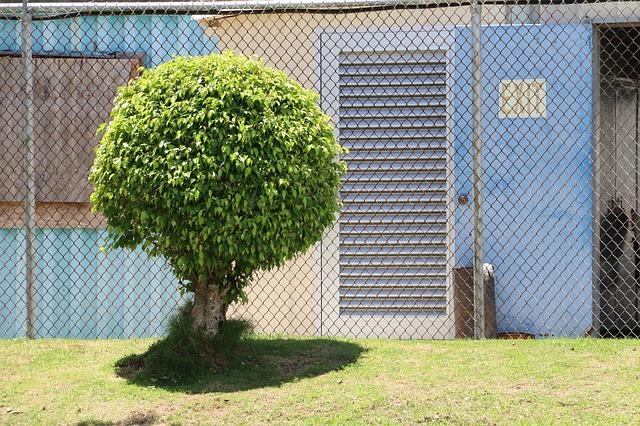 עץ לאחר גיזום בכפר סבא